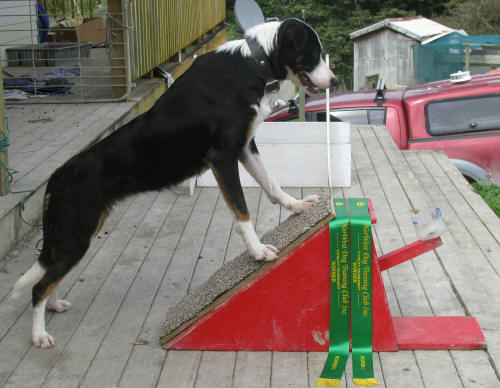 Mangawhai Dog Training Club